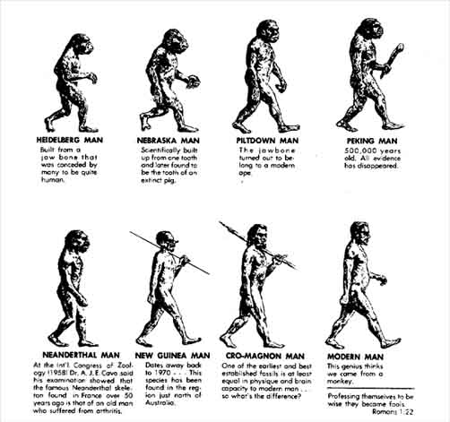 social evolution theory